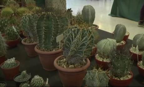Kaktuszkiállítás és vásár