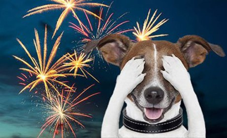 Kutyapánik az augusztus 20-i tűzijáték idején