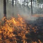 1250-forest_fire_heart_attack-1296x728-header