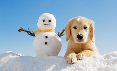 Hogyan gondoskodjunk télen négylábú kedvenceinkről?