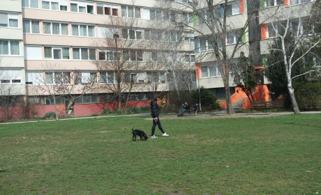 Kutyafuttatóval bővülhet a lakótelep