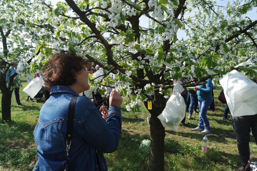 Nyílt nap a cseresnyéskertben