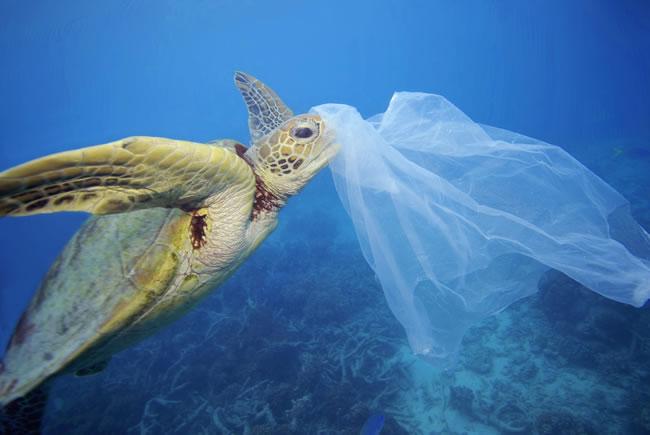 Mondjunk nemet az egyszer használatos műanyagokra!